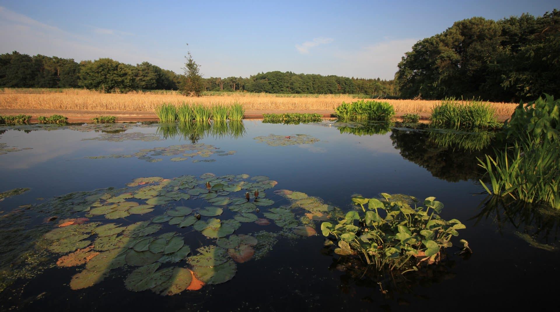 Vogelvriendelijke tuin met natuurlijke vijver Jeroen Hamers