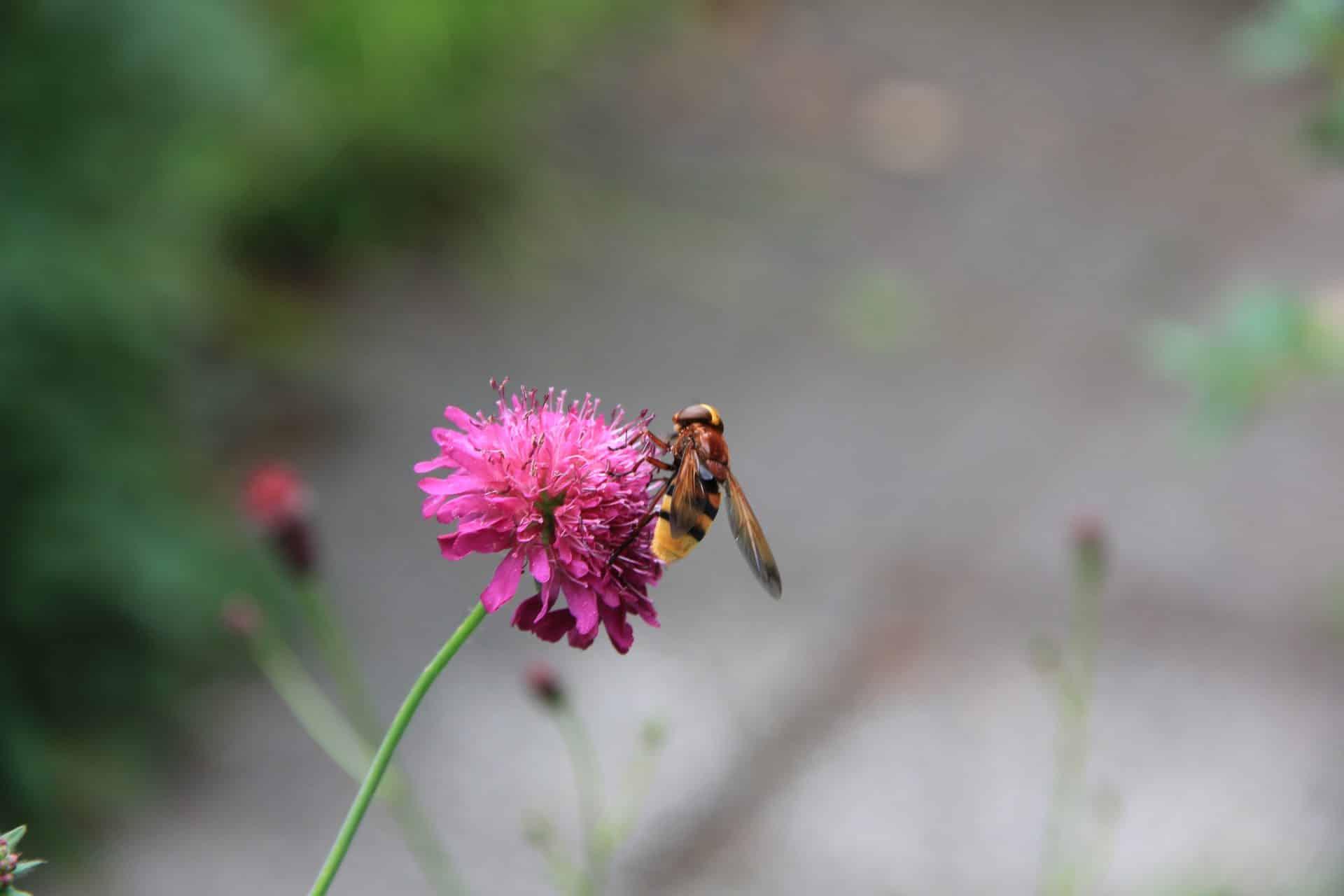 Beplanting trekt vlinders en bijen aan - Jeroen Hamers