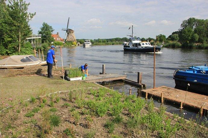 Aanplant natuurlijke rietoevers landschapsontwerp Nigtevecht Jeroen Hamers