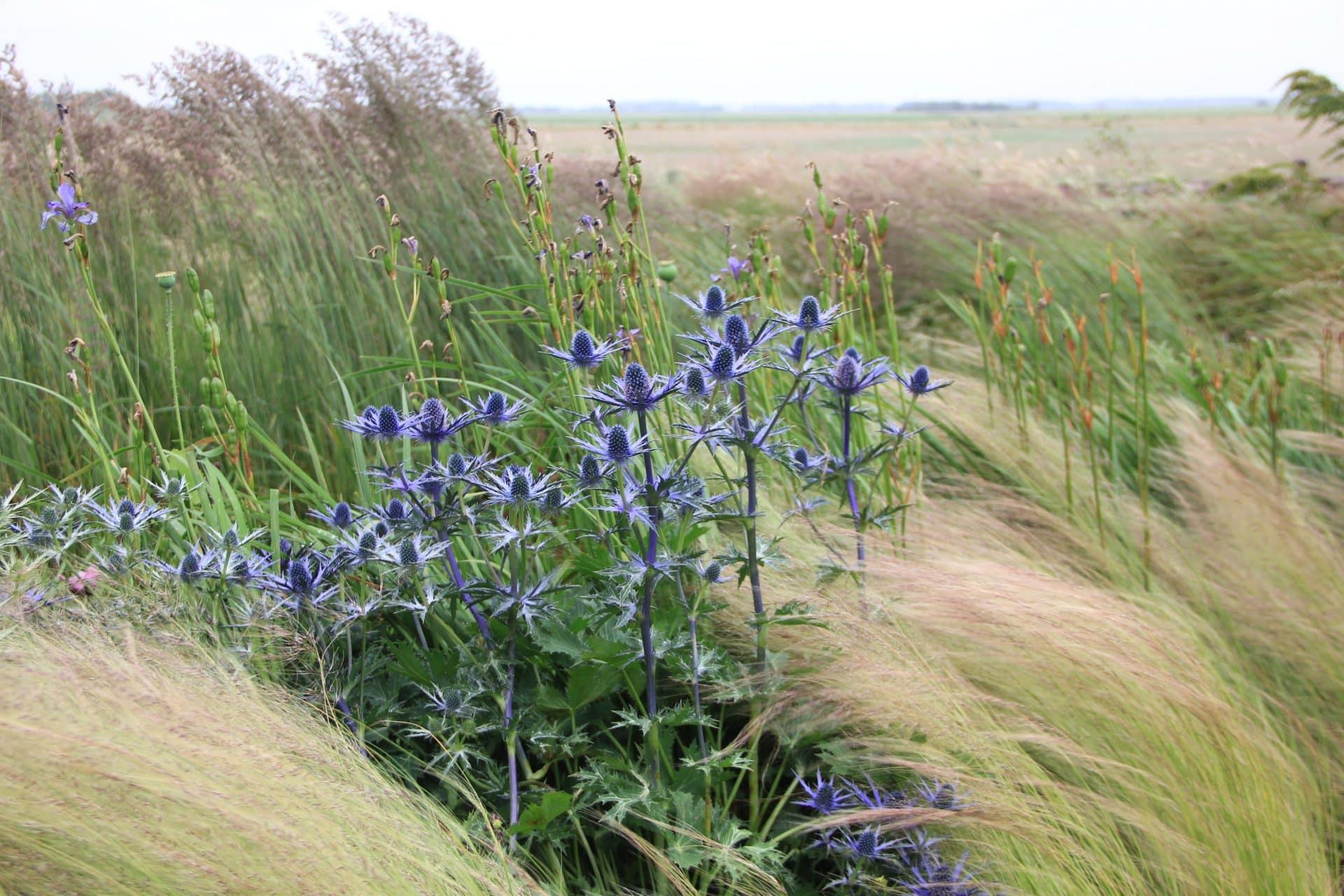 Zeewind bestendige beplanting Texel Jeroen Hamers