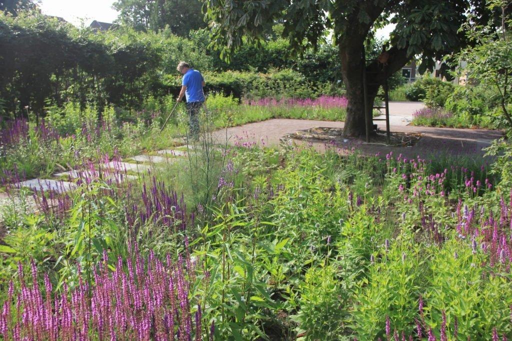 Planten voor vlinders en bijen Jeroen Hamers
