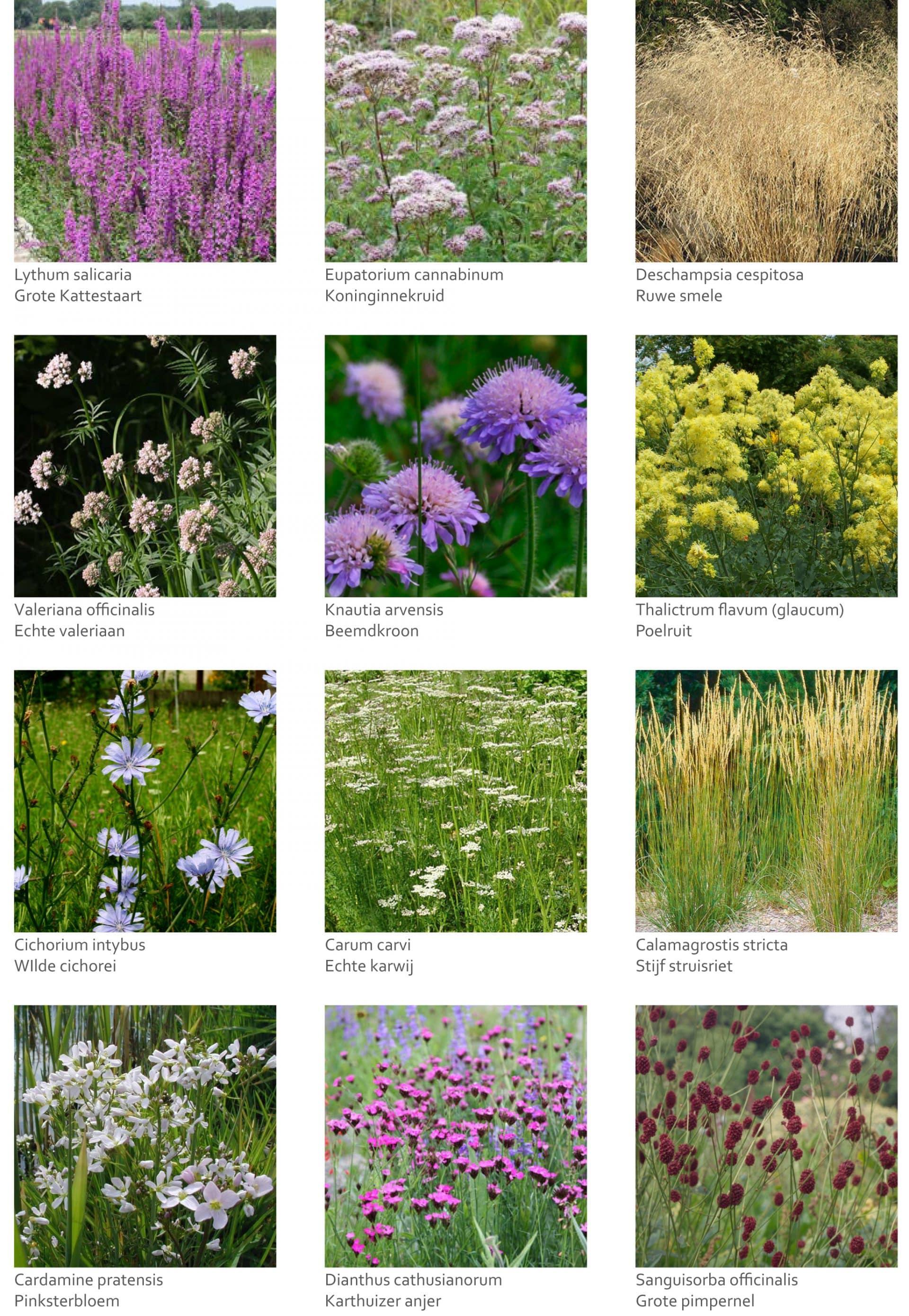 Inheemse plantensoorten De Horn Rijnsburg Jeroen Hamers
