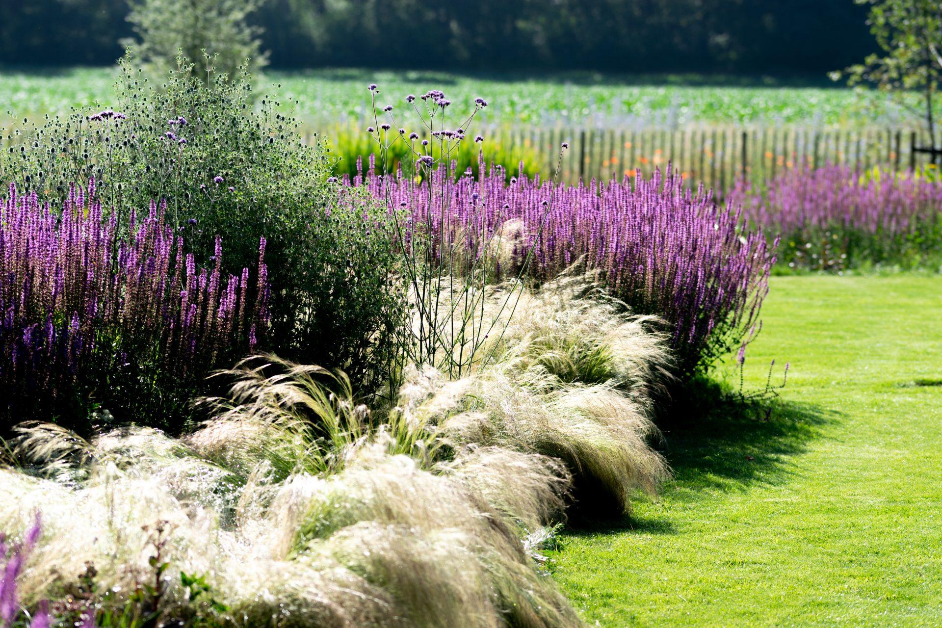 Vaste planten en siergrassen Jeroen Hamers