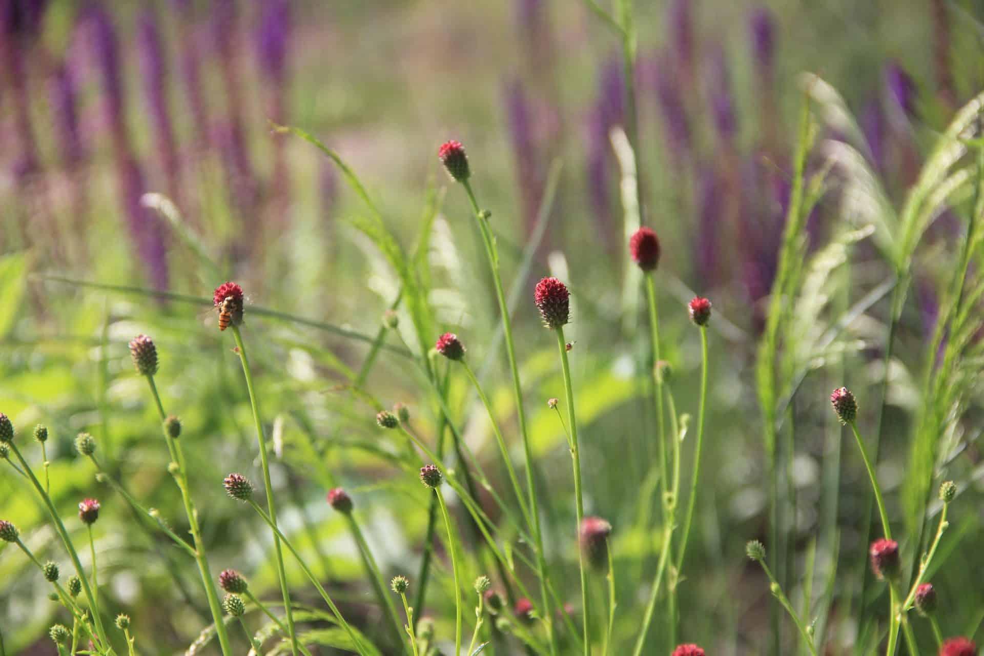 Je kunt altijd iets bijdragen aan lokale ecologie voor bijvoorbeeld vlinders, bijen, vogels en amfibieën. Een tuin kan zo een steppingstone binnen het landschap worden. En alle tuinen bij elkaar samen hebben de potentie om een geweldig groot leefgebied voor deze dieren te vormen. Als er maar aandacht aan wordt besteed in het ontwerp en de tuin zo groen mogelijk wordt gemaakt. De juiste soortenkeus is daarbij wel bepalend. Een veel gekozen plantensoort zoals de Hortensia 'Annabelle' heeft juist geen enkele waarde. Je zult daar geen vlinder in de buurt zien. Dit soort doorgekweekte planten vermijden we daarom graag en we zorgen voor soorten waar de lokaal voorkomende dieren iets aan hebben.
