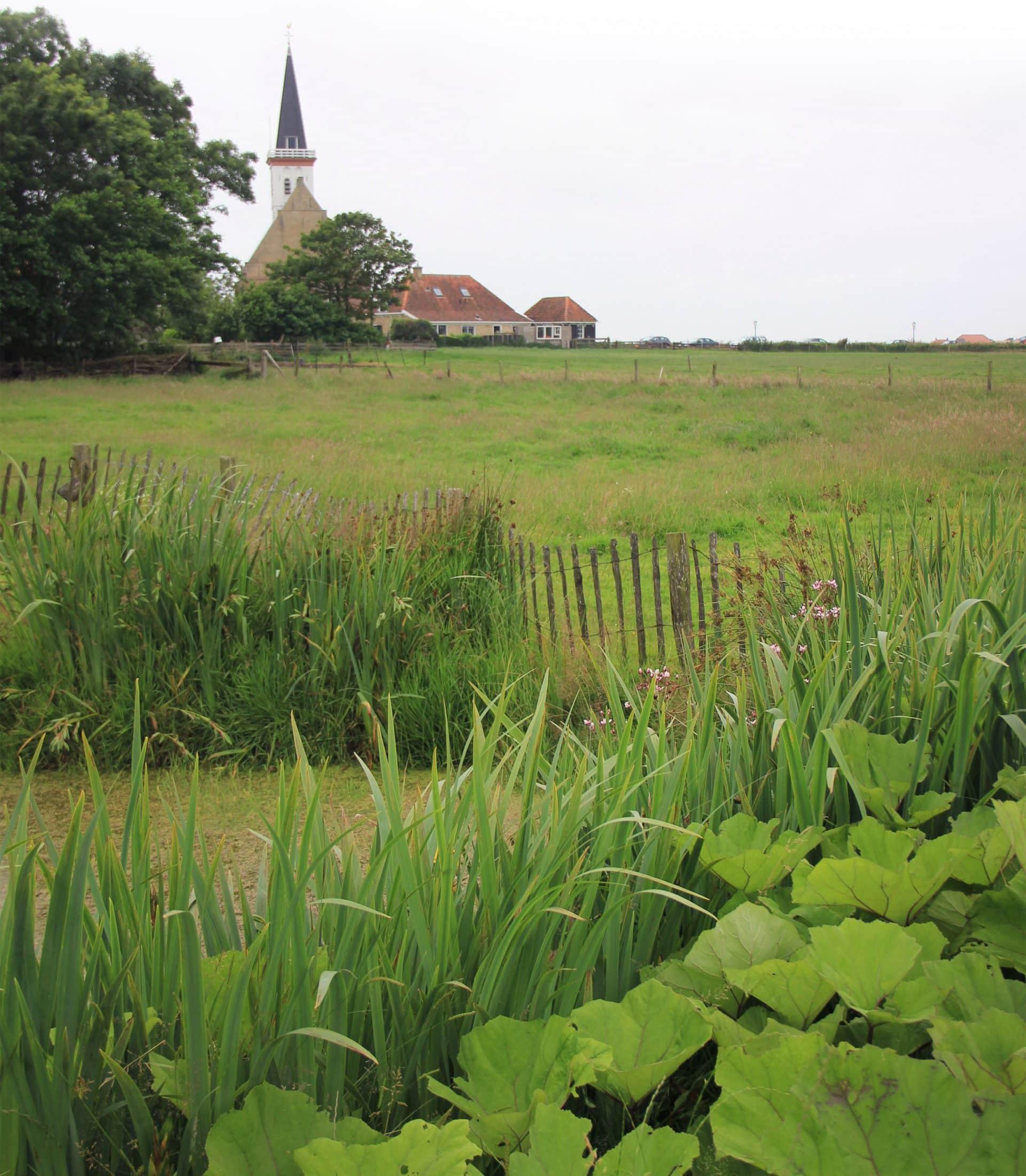 Natuurlijke vijver Den Hoorn Texel Jeroen Hamers