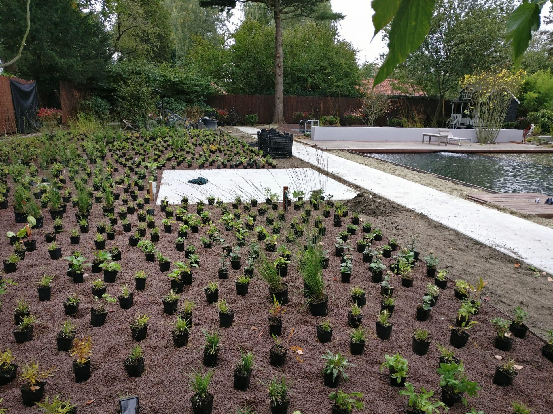 aanplant vaste planten Utrecht Jeroen Hamers