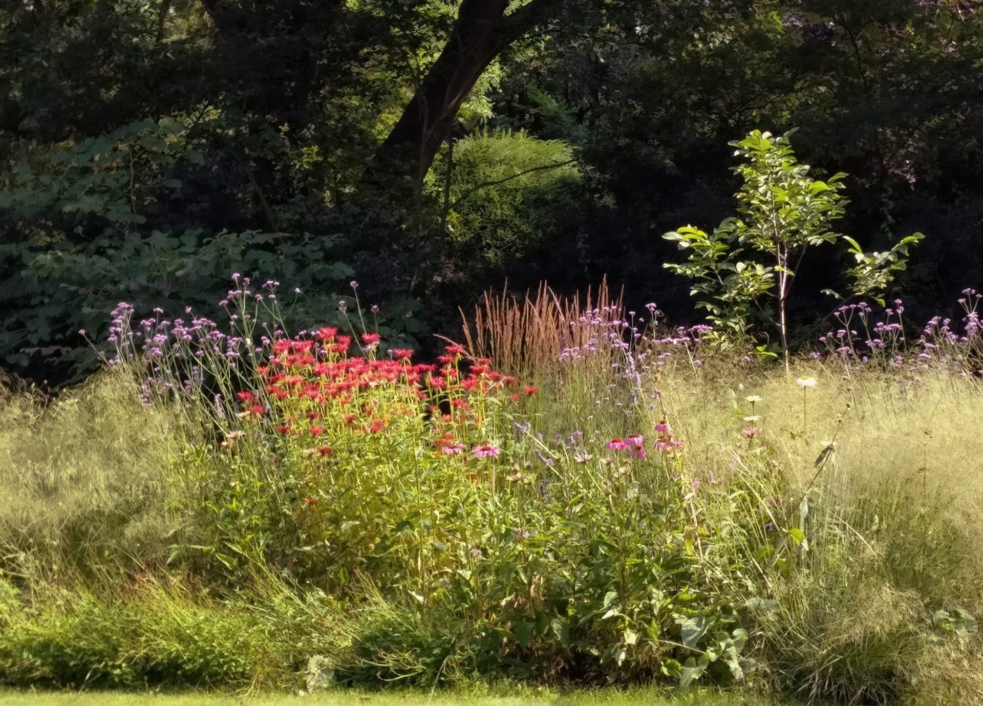 droogtebestendige beplanting Jeroen Hamers